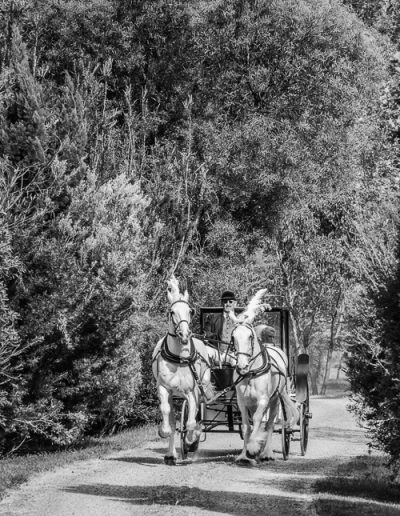 Twisted Lane - Horse and Carriage Black and White