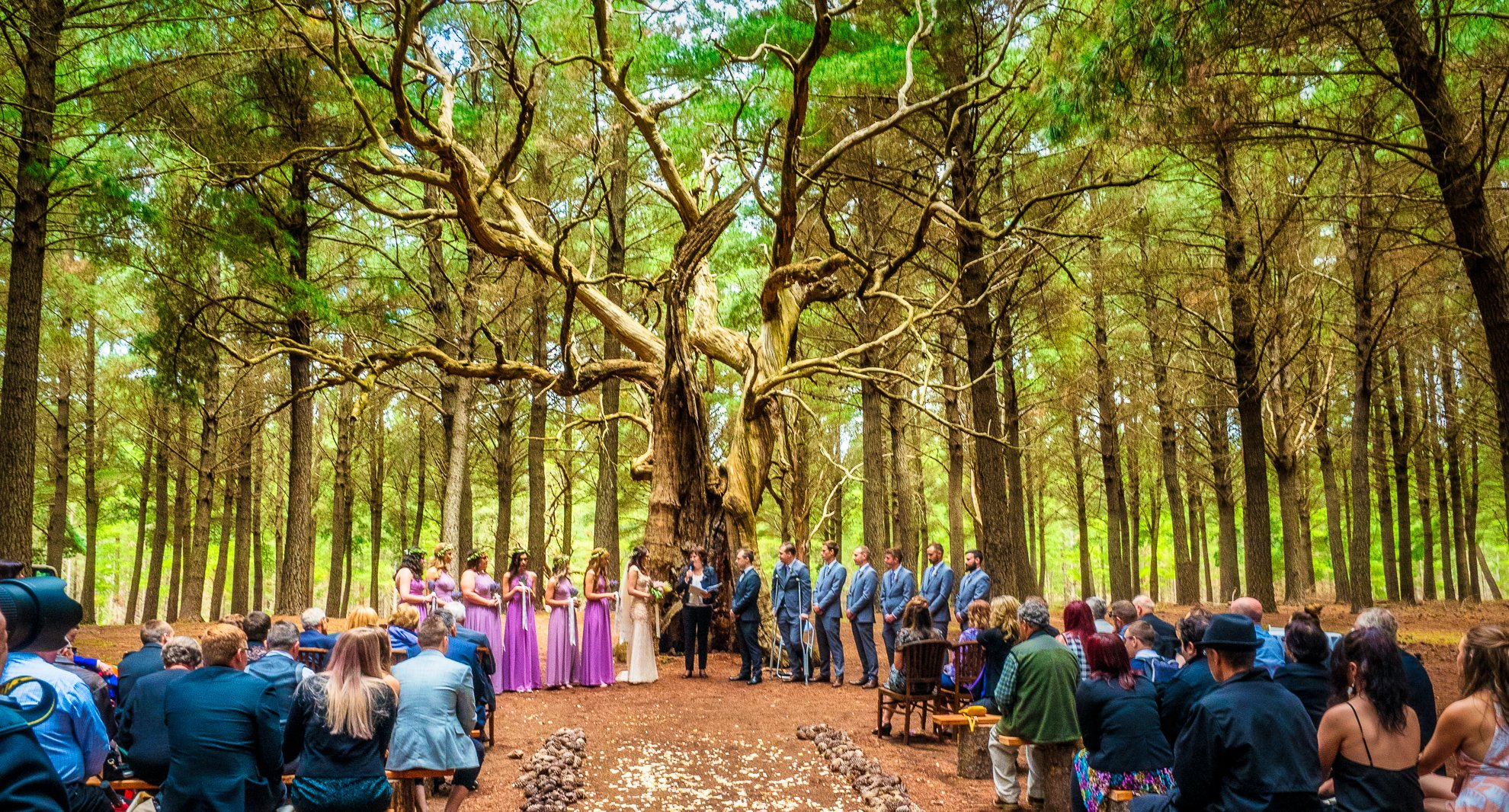 Twisted Lane Wedding Photography